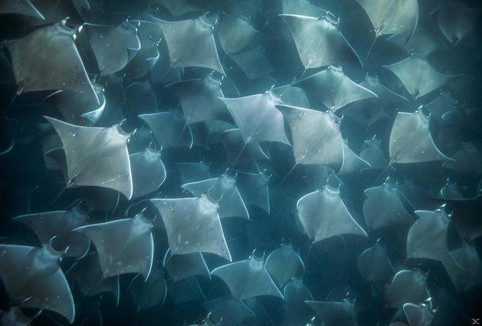 Die Welt der Haie (BLU-RAY)
