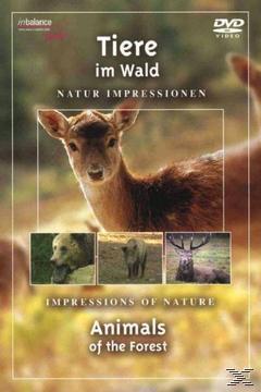 Tiere im Wald (DVD) für 5,99 Euro
