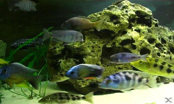 aquarium impressionen